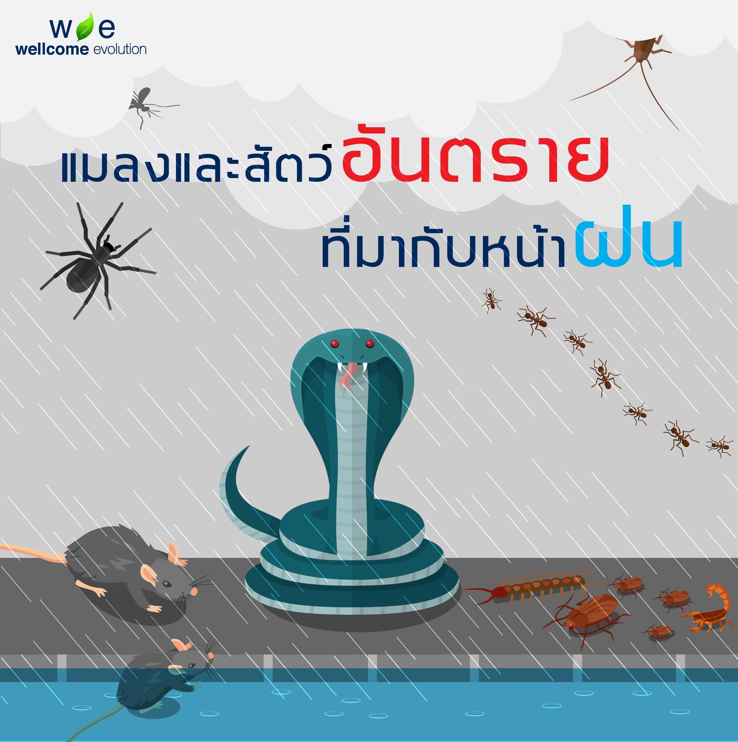 """""""แมลงและสัตว์อันตรายที่มากับหน้าฝน"""""""