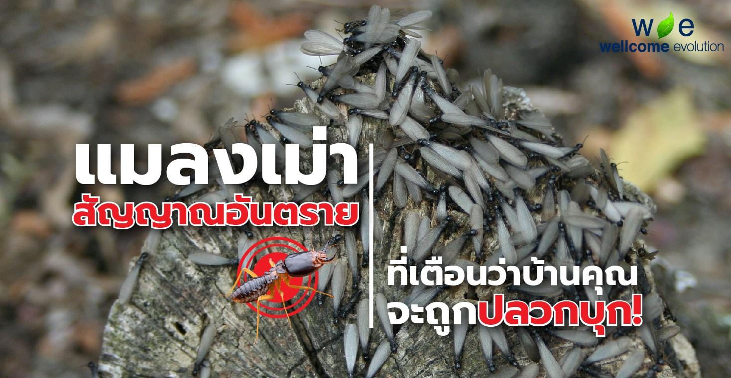 Moth or Mayfly – sign of dangerous termites infestation