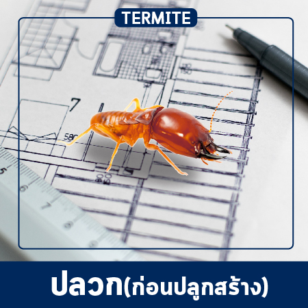 Pest Control & Protection Services (pre-construction)