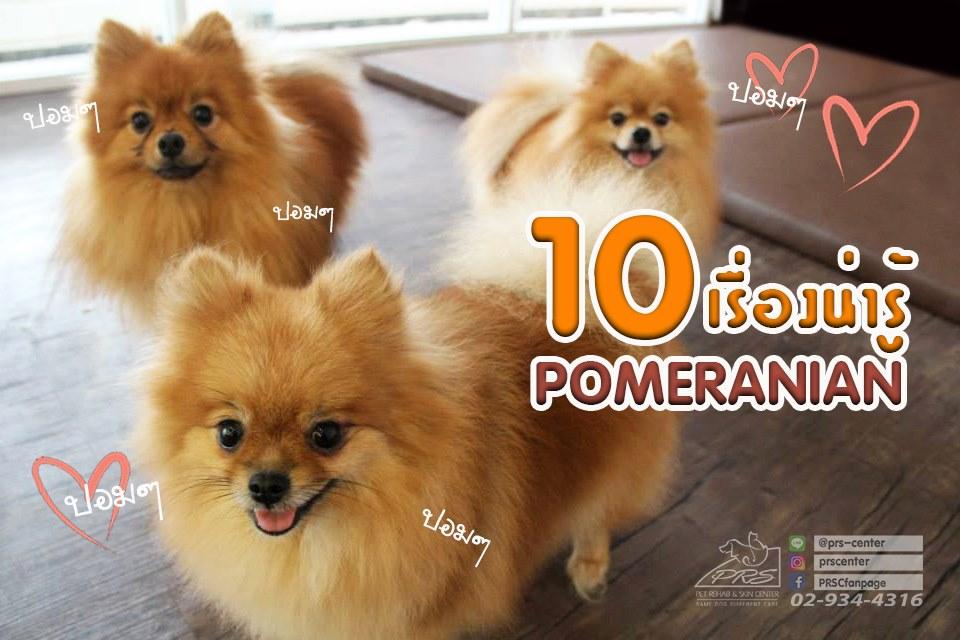 10 เรื่องน่ารู้ของปอมเมอเรเนียน
