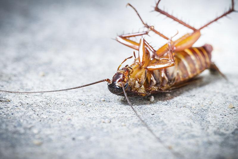 10 วิธีกำจัดแมลงสาบให้เลิกกวนบ้านเราซะที !!!