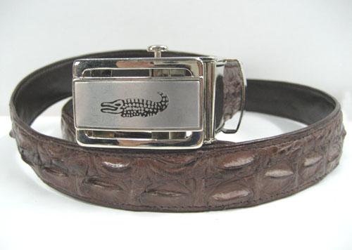 Men Genuine Crocodile Belt in Dark Brown Crocodile Leather  #CRM638B-03