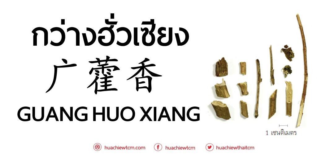 กว่างฮั่วเซียง  广藿香 - ข้อมูลสมุนไพรจีน