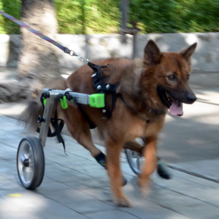 Wheelchair for handicapped animals
