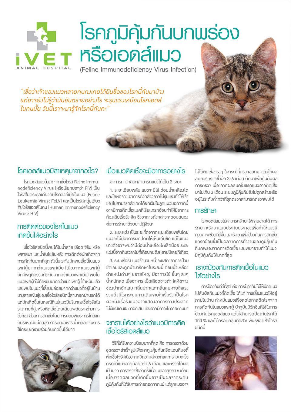โรคภูมิคุ้มกันบกพร่อง หรือ เอดส์แมว