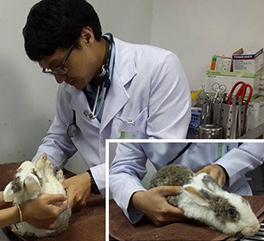 น้องเถาะ  กระต่ายหนุ่ม อาการท้องเสียอย่างรุนแรง