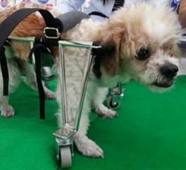 ดุ๊กดิ๊ก เป็นโรคเกี่ยวกับระบบประสาท อัมพาตทั้ง 4 ขา