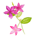 ศิลปะเด็ก : วาดดอกไม้...ระบายสีน้ำ