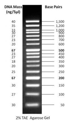 50 bp DNA Ladder