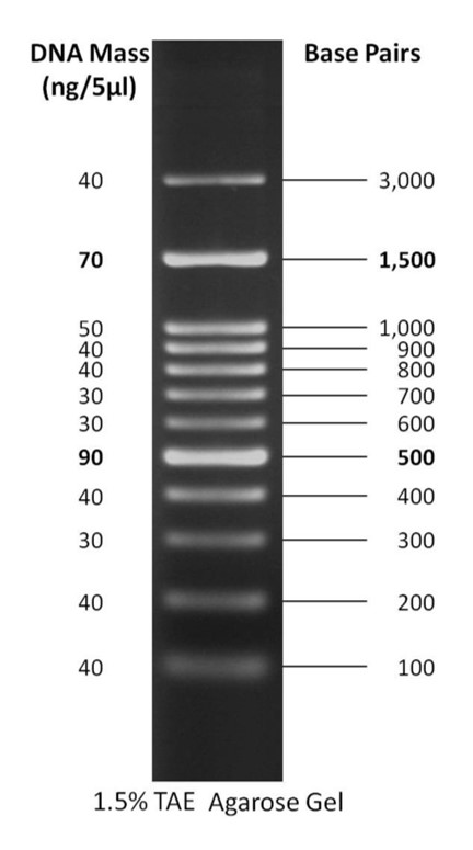 100 bp PLUS™ DNA Ladder, 50ug