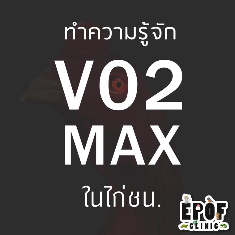 VO2 Max ในไก่ชน