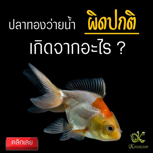 ปลาทองว่ายผิดท่า เกิดจากอะไร ?
