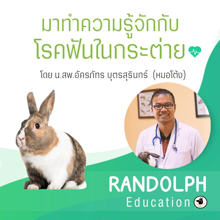 มาทำความรู้จักกับโรคฟันในกระต่าย