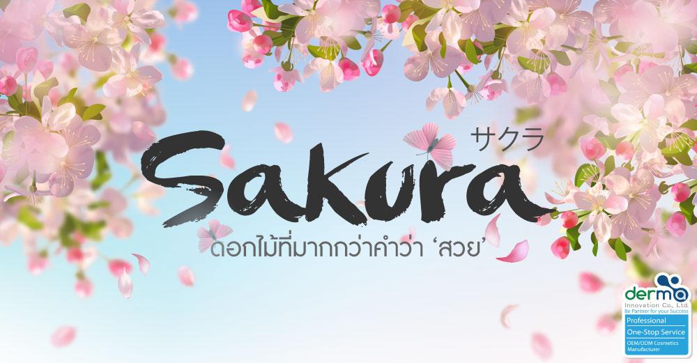 ประโยชน์ของ Sakura ดอกไม้ที่มากกว่าคำว่า 'สวย'