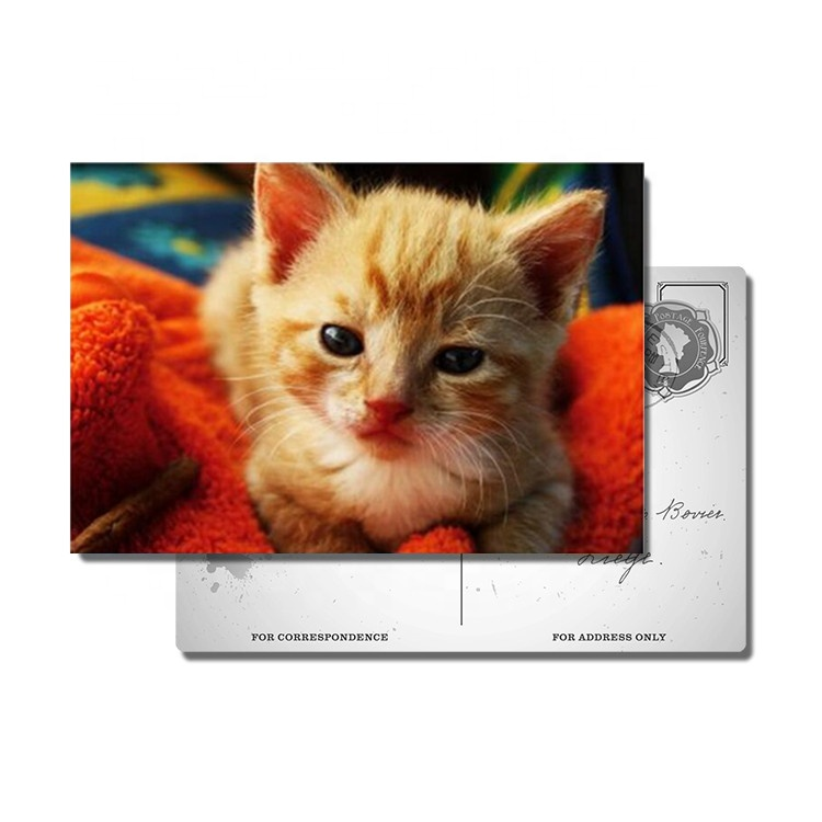 3d lenticular postcard of animal cats and dogs lenticular postcards