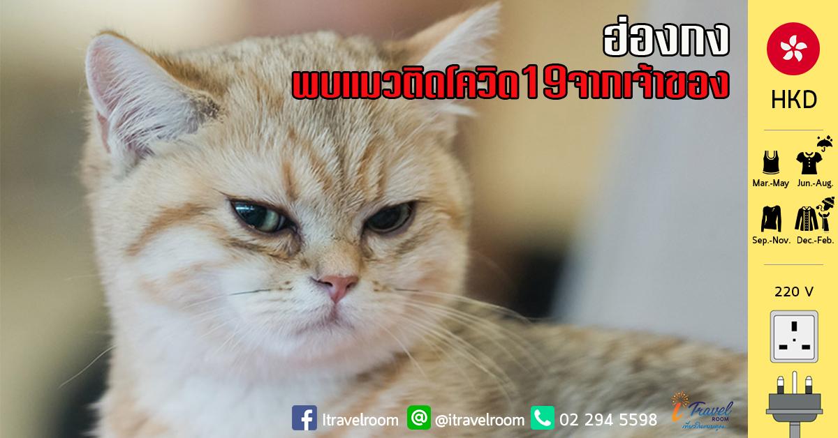 ฮ่องกงพบ แมวติดเชื้อโควิด-19 จากเจ้าของ หลังผลตรวจออกมาเป็นบวก