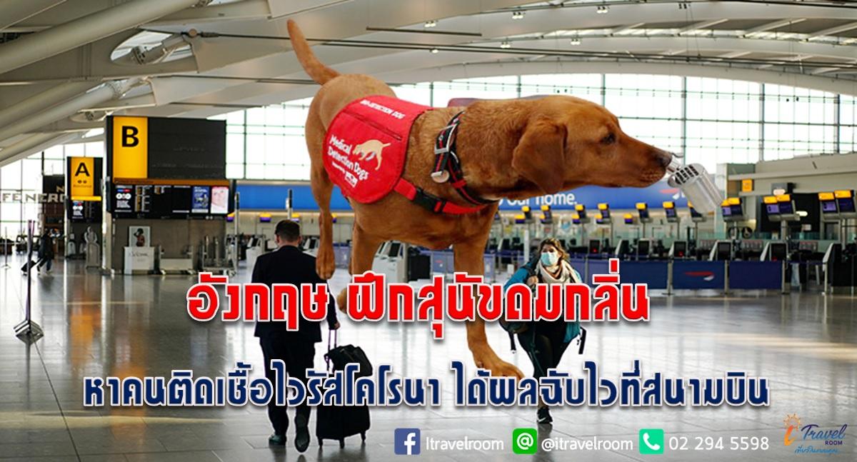 อังกฤษ ฝึกสุนัขดมกลิ่น หาคนติดเชื้อไวรัสโคโรนา ได้ผลฉับไวที่สนามบิน