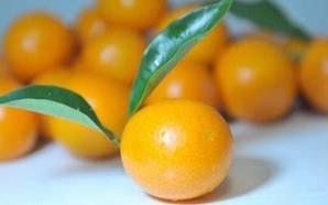咳嗽时能吃金桔吗?