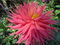 เชียงราย นครแห่งดอกไม้งาม 2556