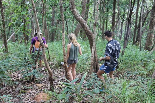 โปรแกรมเต็มวัน เดินป่า เส้นทางอุทยานแห่งชาติดอยอินทนนท์
