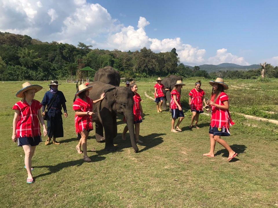 Half Day Morning Phoenix Elephant Sanctuary