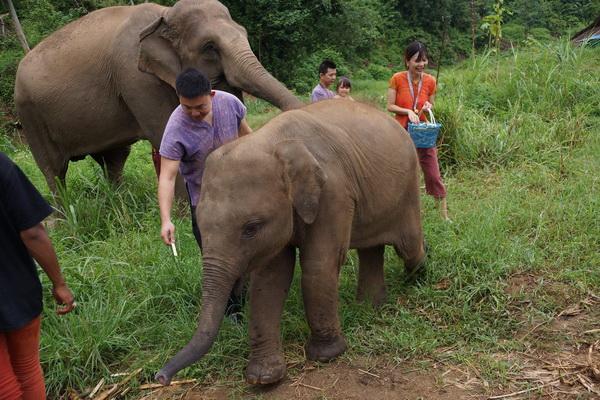 ดูแลช้างเต็มวัน (ไม่มีขี่ช้าง) Ran Tong Elephant Rescue Centre