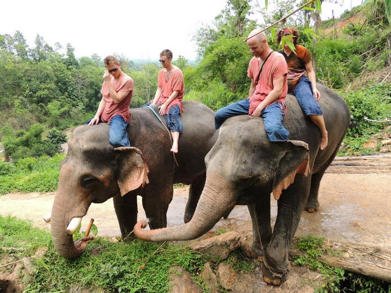 2 Days 1 Night Ran-Tong Elephant Training