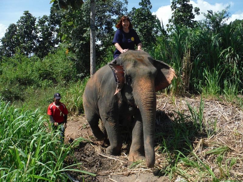 2 Days Eddy Elephant Experience,Chiang Mai Trip,Northern Thailand