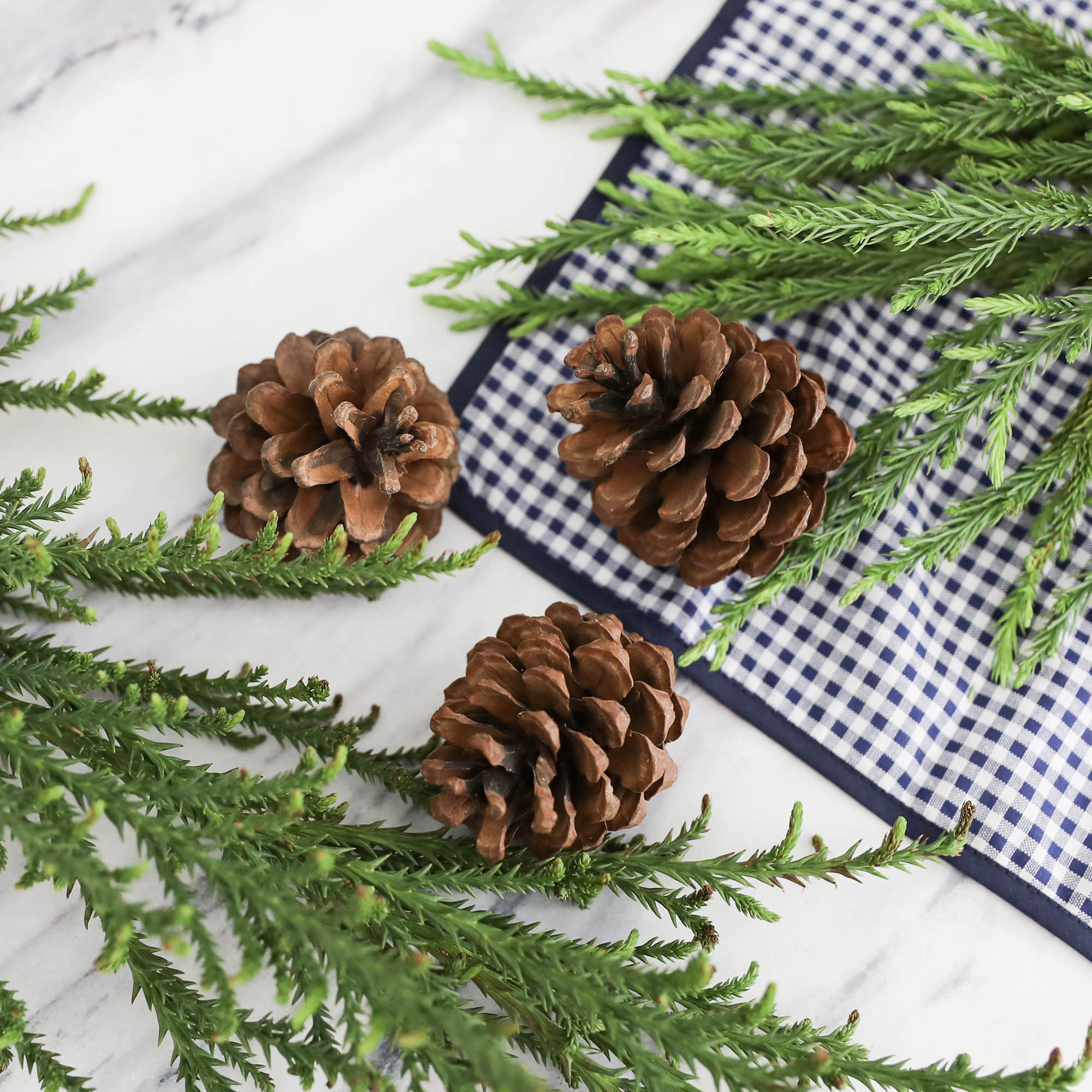 Dried Seed-Pine Cone Set of 3