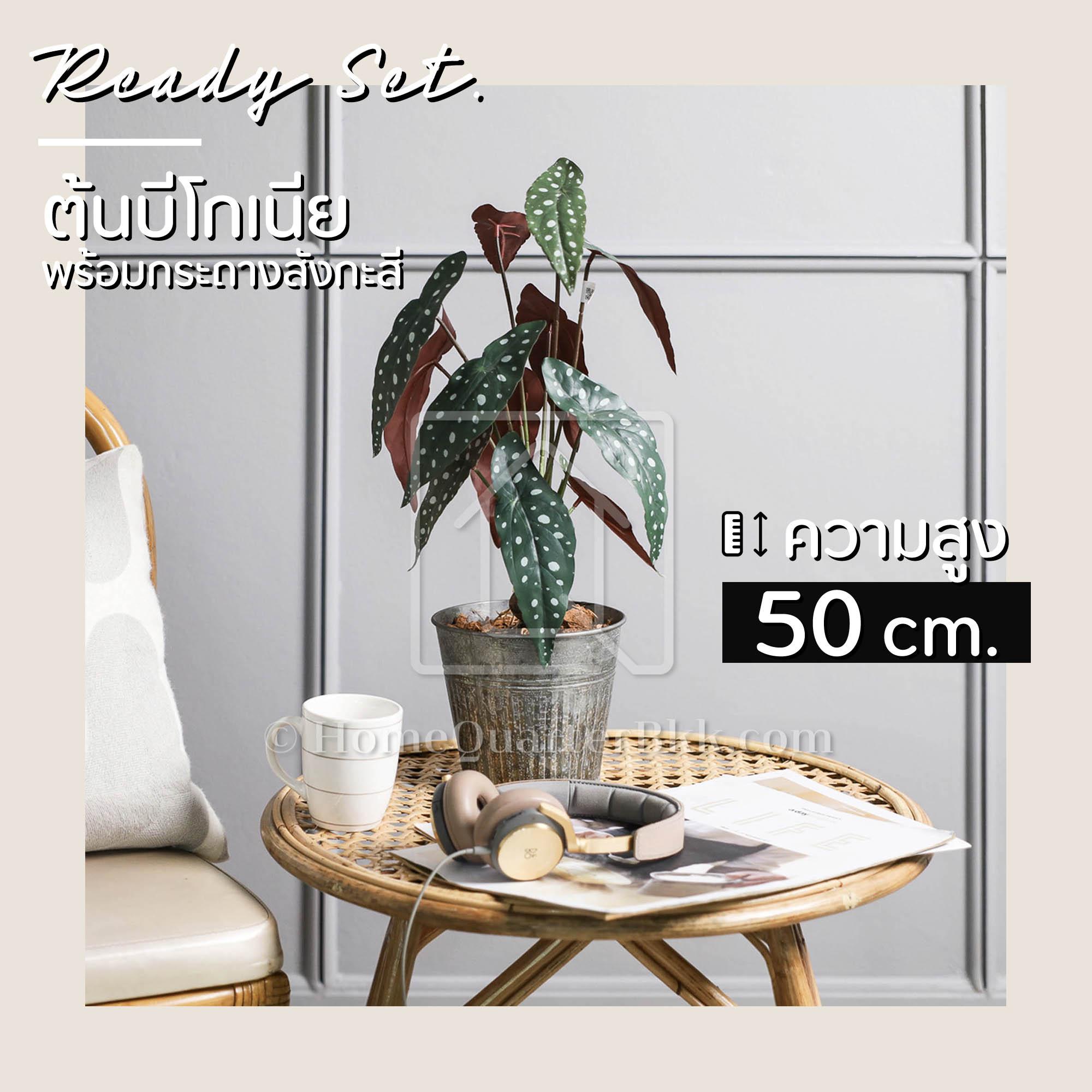 ไลฟ์ลี่ ชุดพร้อมโชว์ ต้นบีโกเนีย | Lively Set-Begonia