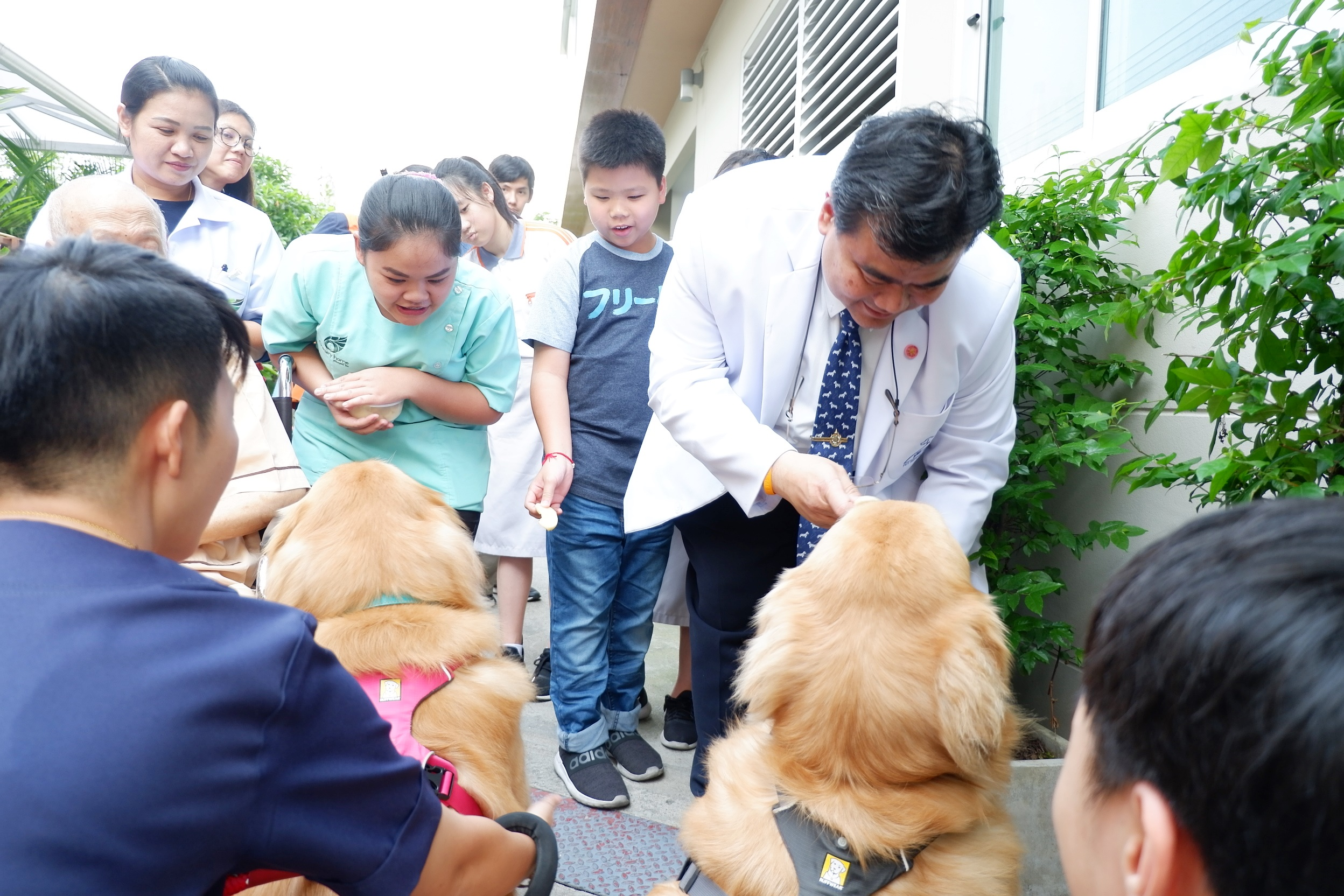 PET THERAPY