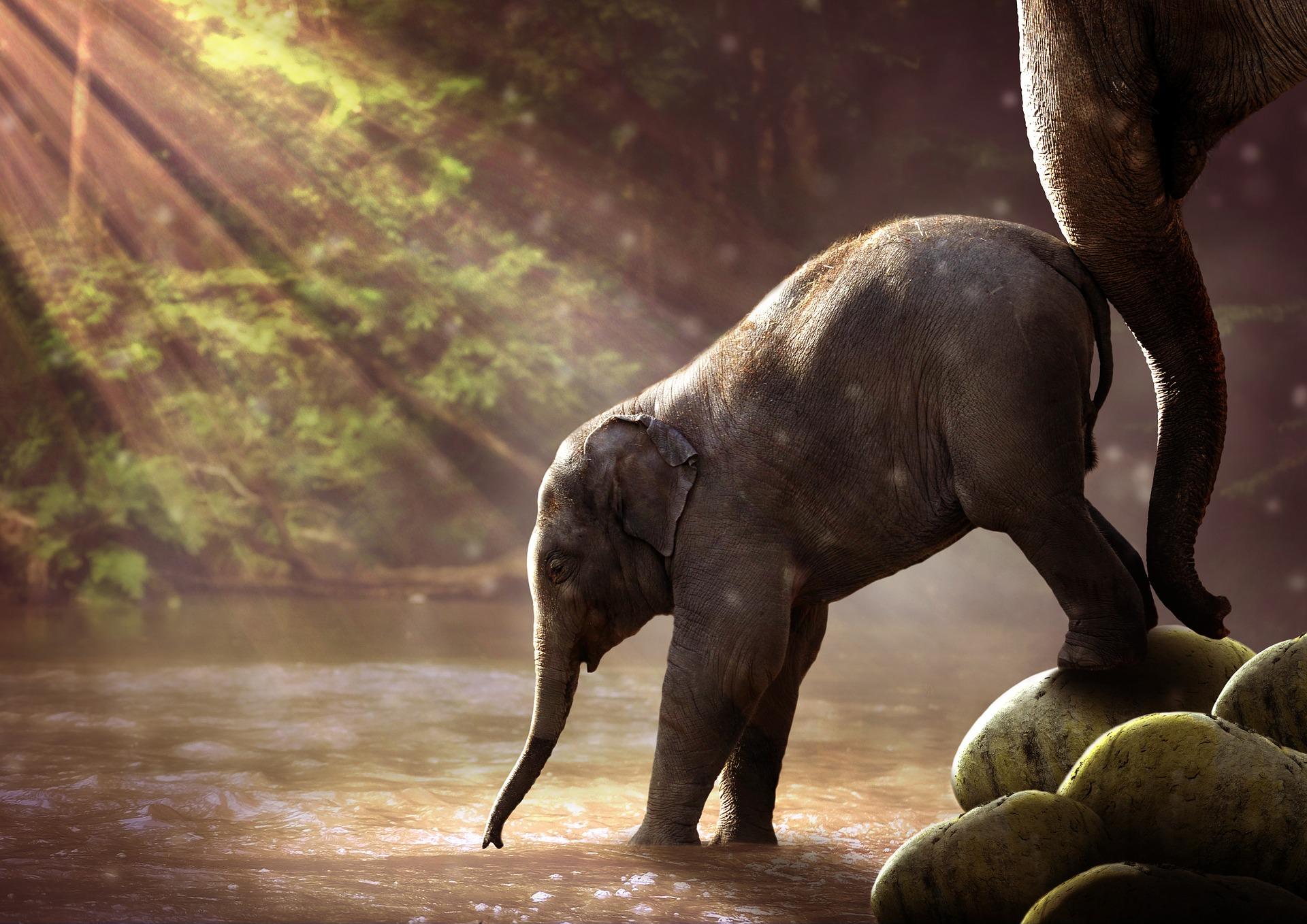 """ The Elephant"""