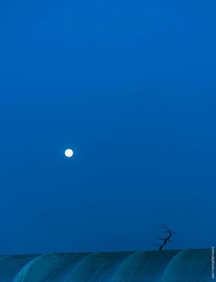 การสนทนาระหว่างพระจันทร์กับต้นไม้บนเต้นท์ดาวพลูโต