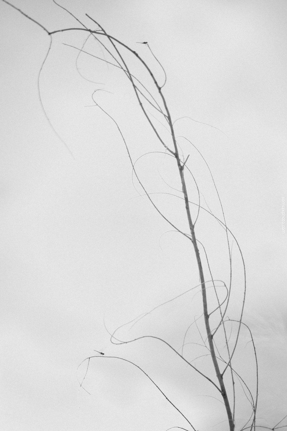 ชื่อภาพ แมงปอเกาะกิ่งไม้...  บางครั้ง การไม่ตั้งชื่อ ไม่รู้ชื่อภาพ   ดูอย่างเดียว...ได้อรรถรสกว่า.....