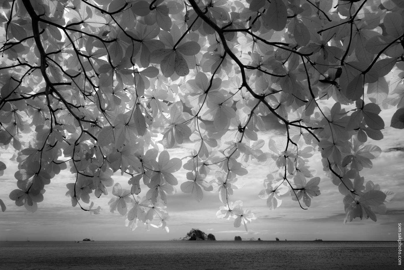 ความงามแห่งโลกไร้สัสัน  #infrared #กระบี่