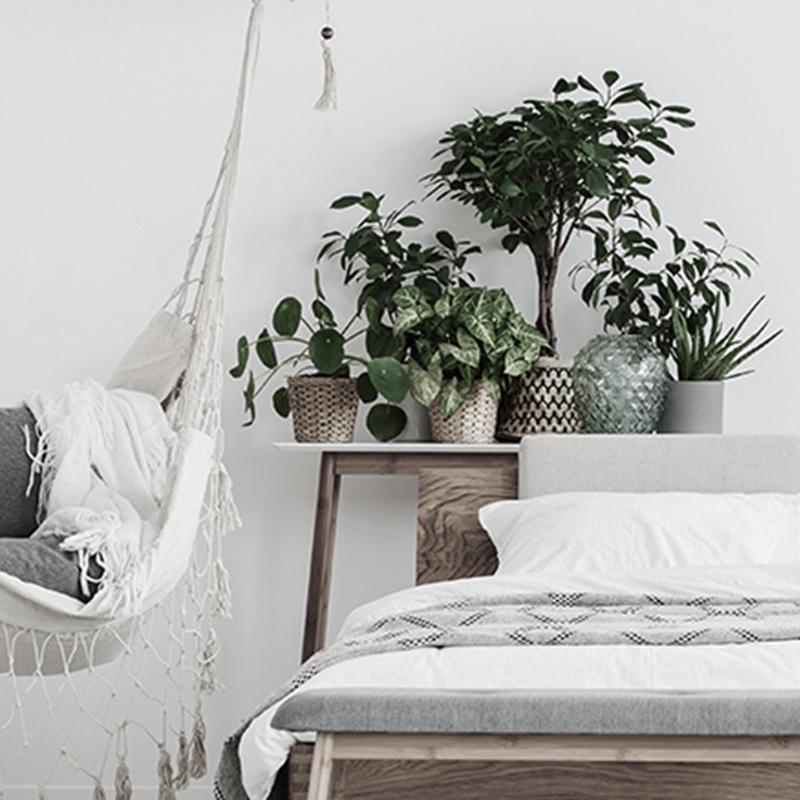 Plants for Interior