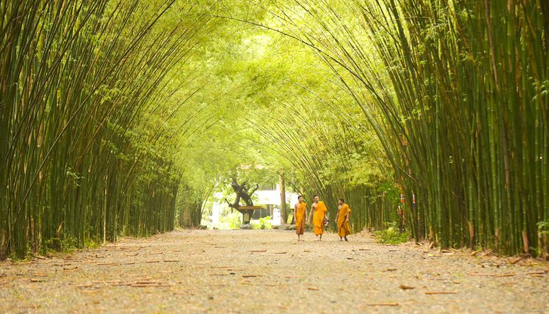 Come out to fix your stress at Nakornnayok Bamboo Grove in Thailand