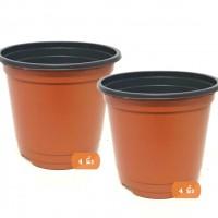 กระถางพลาสติก 4 นิ้ว และ 6 นิ้ว (Plastic pots)