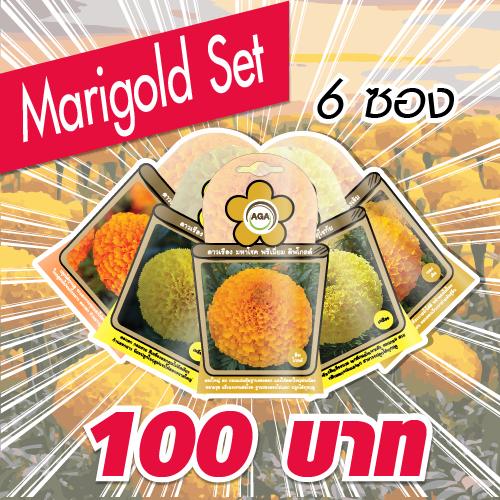 ชุดดาวเรืองมหาโชค (Marigold Set)