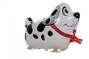 White Spot Dog