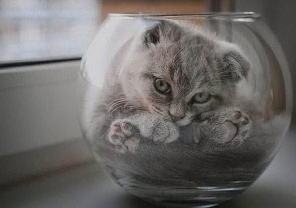 เมื่อ 'แมว' เป็นของเหลวชนิดหนึ่ง ที่พอดีกับทุกสิ่งจริงๆ มีภาพยืนยัน!