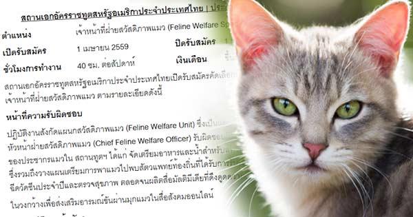 สถานทูตอเมริกาฯ อินกระแส April fools day รับสมัคร จนท.ฝ่ายสวัสดิการแมว