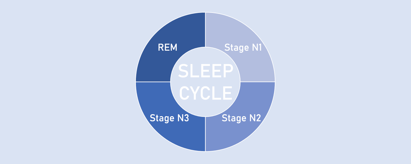เบื้องหลังการนอนหลับ: วงจรการนอนหลับ และการหลับแบบ NREM