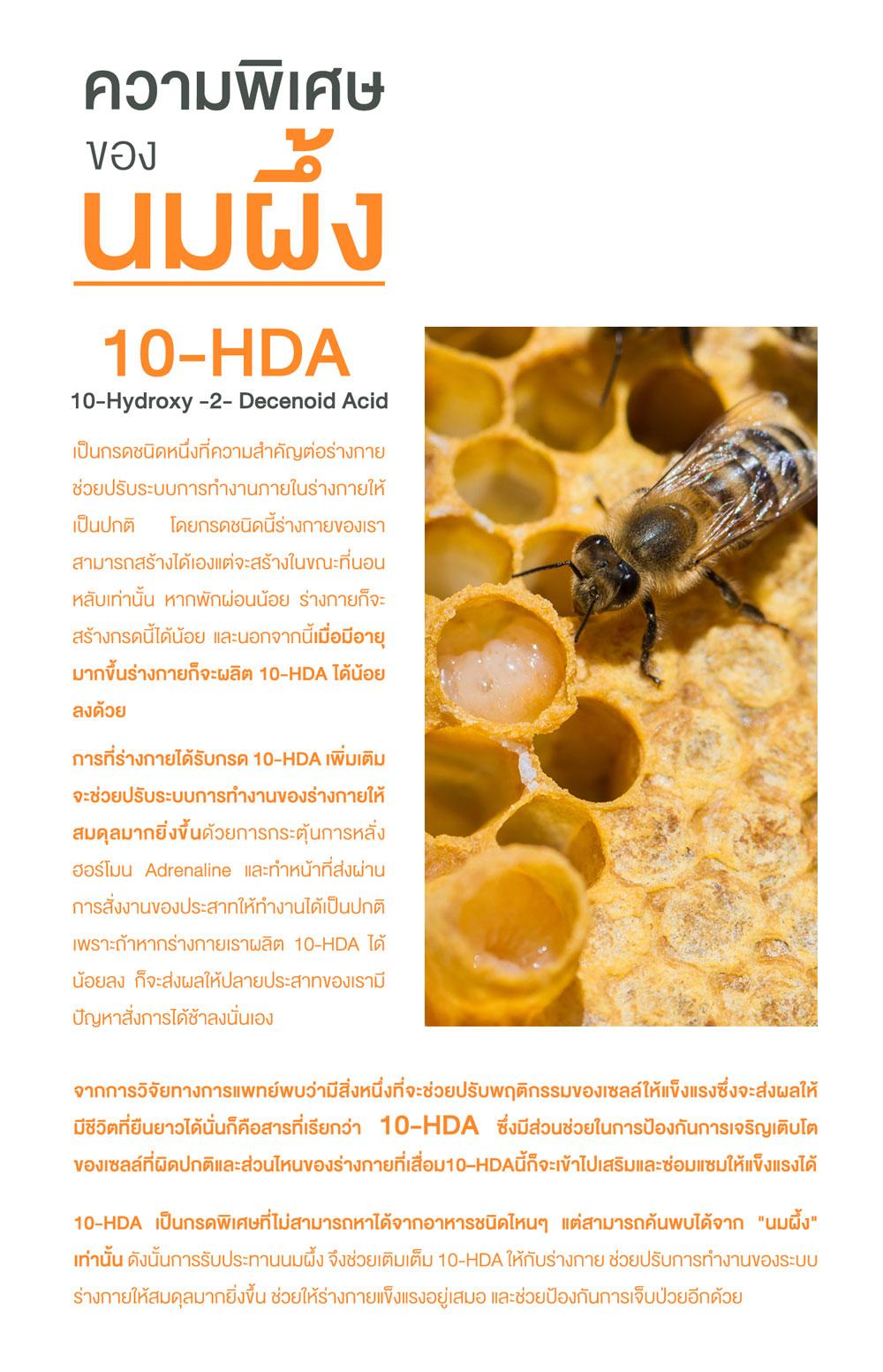 10-HDA คืออะไร สารอาหารในนมผึ้ง ประโยชน์ของนมผึ้ง
