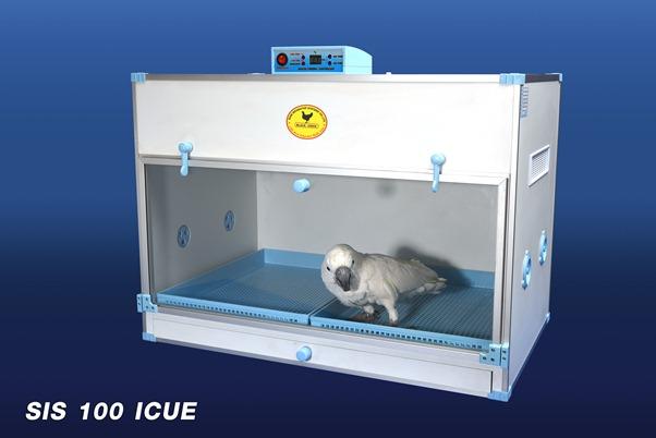 SIS 100 ICUE