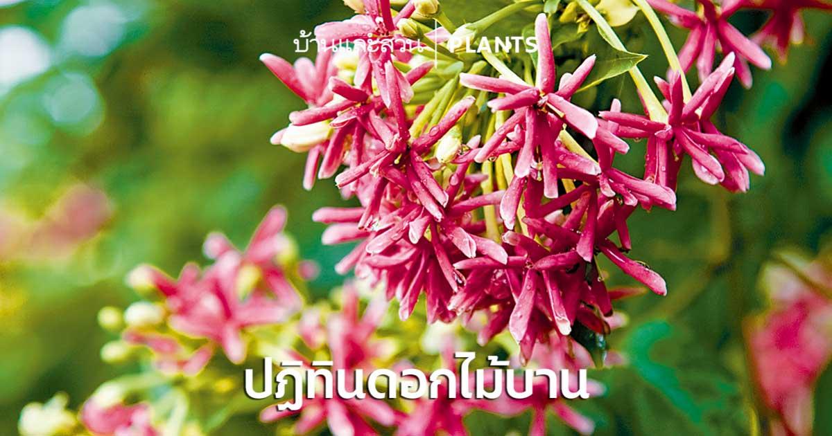 ปฏิทินปลูกดอกไม้ วางแผนจัดสวนให้มีดอกไม้สวยๆตลอดทั้งปี