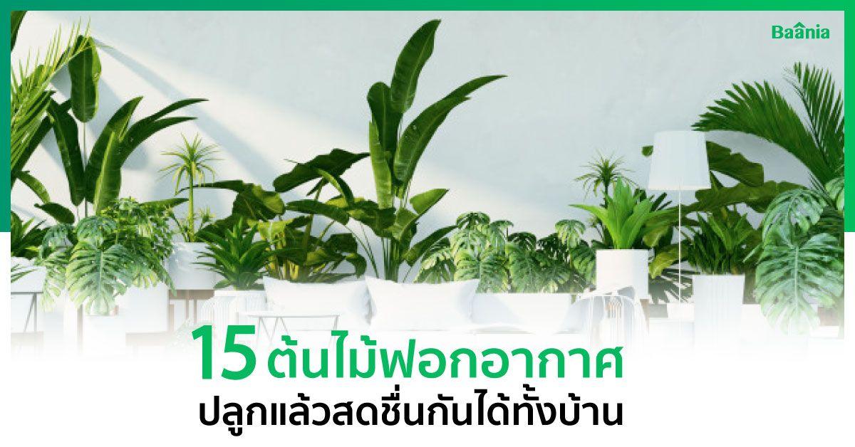 15 ต้นไม้ฟอกอากาศ ปลูกแล้วสดชื่นกันได้ทั้งบ้าน