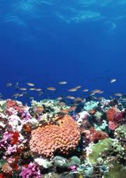 ท่านพร้อมหรือยังที่จะดูแล ปะการังโครงแข็ง (Small Polyp Scleractinia) SPS