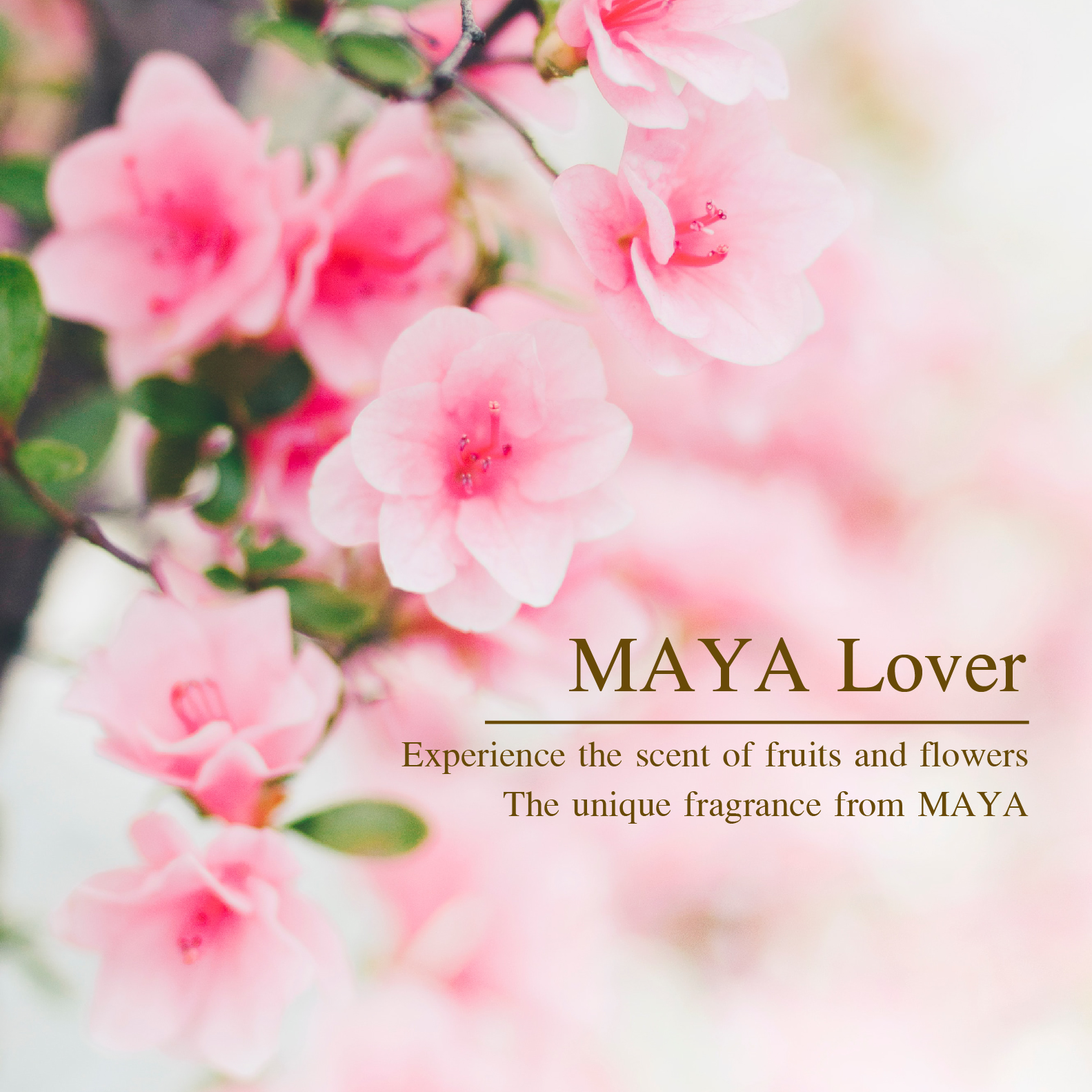 """Reed Diffuser """"MAYA Lover"""" Experience the scent of fruits and flowers the unique fragrance from MAYA"""