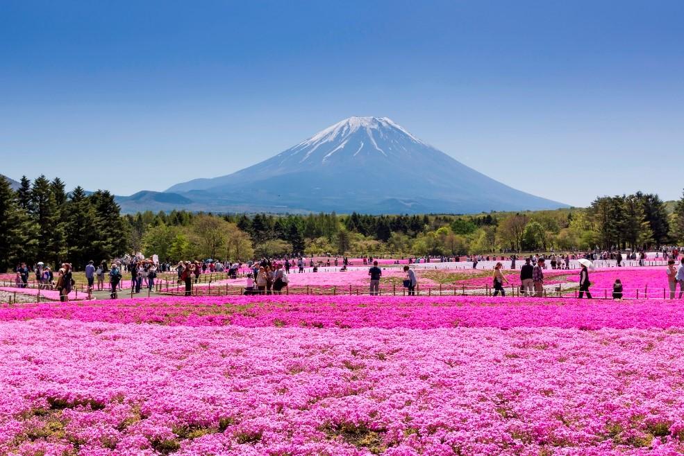 (ห้ามพลาด!!) ทัวร์เอเชีย ญี่ปุ่น โตเกียว พิงค์มอส ชิราคาวะโกะ นาโกย่า 6 วัน 3 คืน บินการบินไทย (JL)